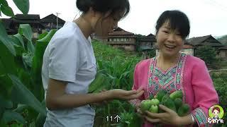 菜园大丰收,这种新品黄瓜大家吃过吗?秋子和三嫂一摘就是20个