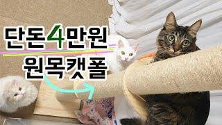 가성비 고양이 캣폴! 안전성, 단점, 발판 크기 등 리뷰! [고양이 친화적 인테리어]