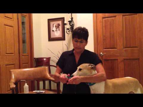 Jenifer V. Barker DVM Greyhound Home Dental Care