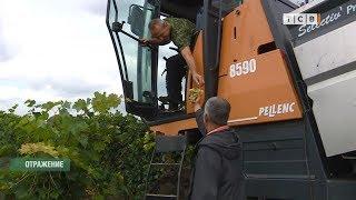 Путешествие на виноградники завода «KVINT»