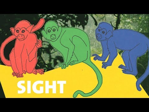 Our Senses: How Mammals See the World In Many Colors