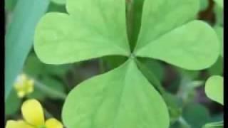 零極限─創造健康 平靜與財富的夏威夷療法.flv