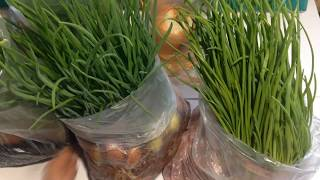 Лук на перо / Выращивание лука на перо в опилках / Выращивание лука как бизнес