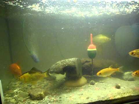 teichfische vor dem winter gerettet youtube