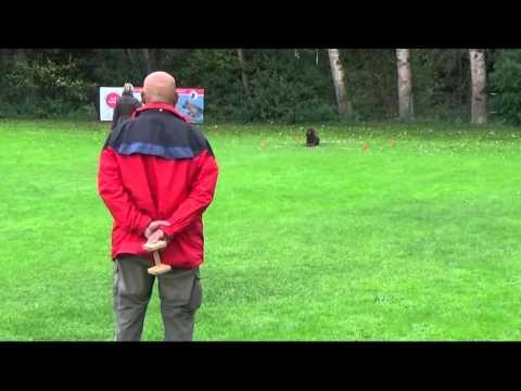 Barbet Bluna - Obedience Turnier September 2015