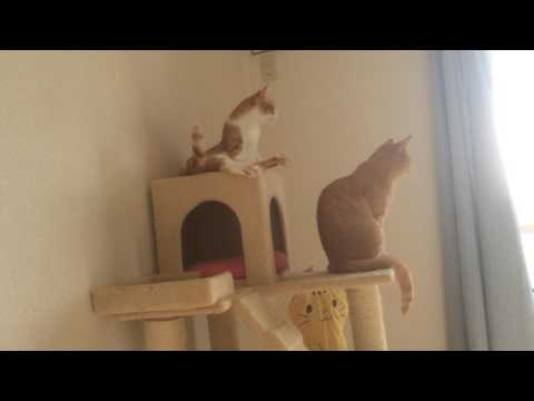 春の陽気を感じる猫『保護猫るる らら物語』