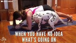 Dog Yoga: Pup Is Really Happy To Be In His Mom's Yoga Workout   The Dodo
