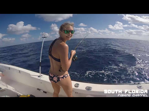 Catch n Cook FLAG Yellowtail - Fishing in Key Largo