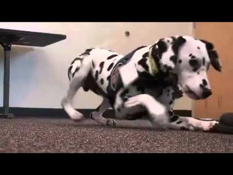Dalmation Helps Teach Fire Safety
