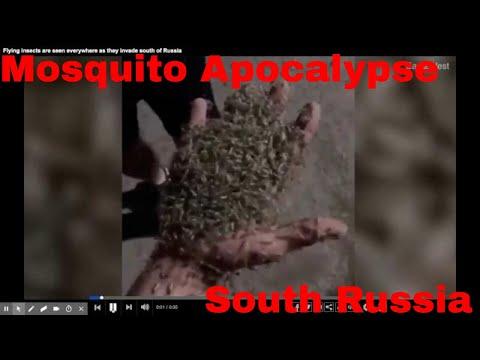 Mosquito Apocalypse In South Russia
