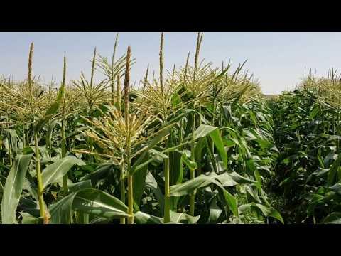 Organic Farm in UAE - Al Rawafed Organic Agriculture farm