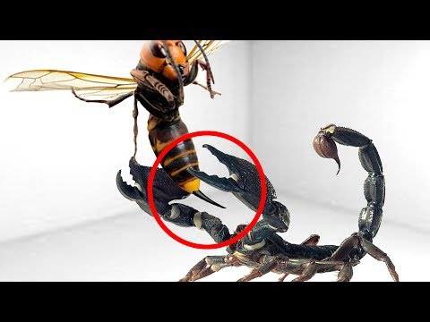 Thumbnail: 5 CRAZIEST Insects Fights Caught On Camera