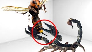5 CRAZIEST INSECTS FIGHTS CAUGHT ON CAMERA