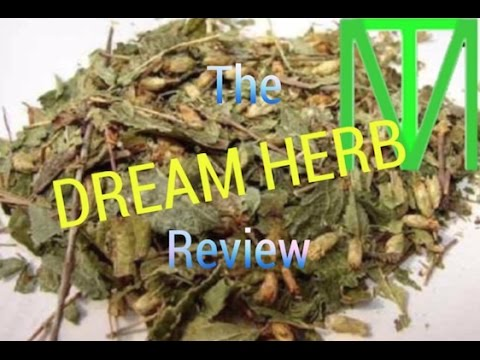 Trying The Lucid Dream Plant | Have Vivid Dreams Tonight!