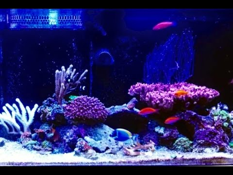 Excess Demand For Alkalinity In Saltwater Reef Tank - Solution