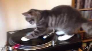 Смешное видео про кошек 52, подборка 2013-2014