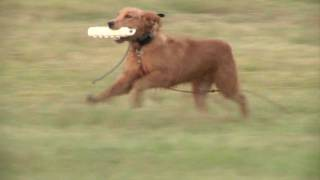 Force Fetching: With Ultra Lite E Collar, For Retrievers, Gun Dogs, No Ear Pinch