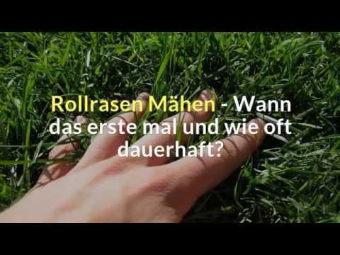 Gemeinsame Rollrasen Mähen - Wann das erste mal und wie oft dauerhaft? - YouTube &AU_89