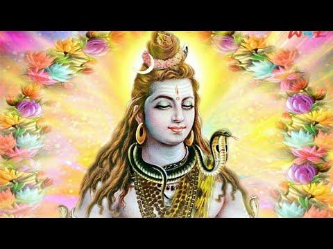 Solid bhola by jiashing dolat puriya   Wirtar  tiger swami