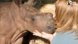 Baby Rhinos Killed Because People Wanted Their Horns | The Dodo
