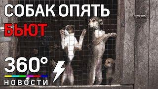 Собак снова избивают в приюте «Гвардия»
