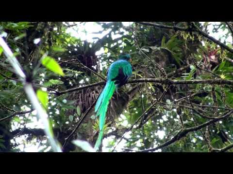 Birds of northern Nicaragua