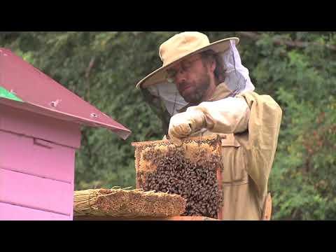 "<span class=""title"">Beekeeping at Ecovillage Bhrugu Aranya</span>"