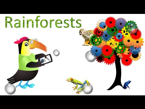 Rainforest : Amazing Facts, Sights And Sounds : Science Videos For Kids