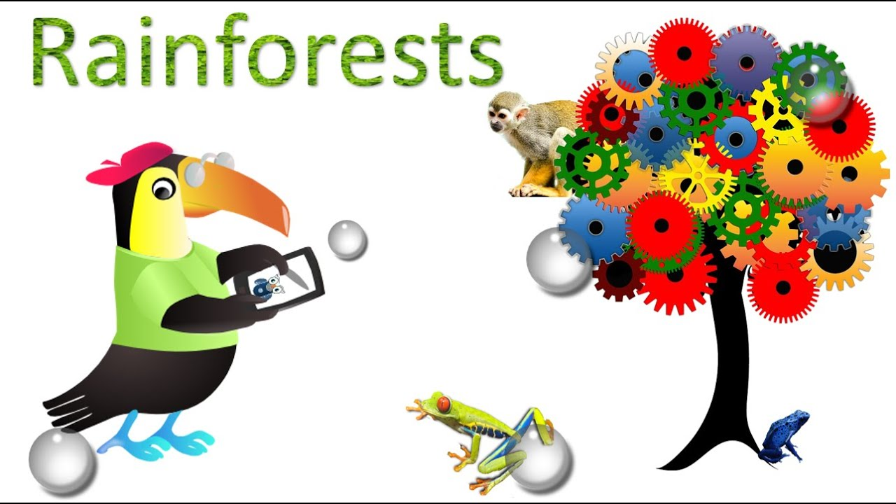 Rainforest  Amazing Facts sights and sounds  Science Videos for kids - YouTube  sc 1 st  YouTube & Rainforest : Amazing Facts sights and sounds : Science Videos for ...