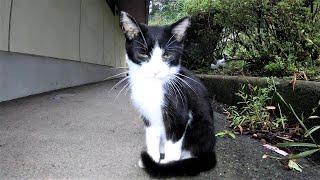 このまえ僕を見て逃げたハチワレ子猫を懐かせようと接近してみたら