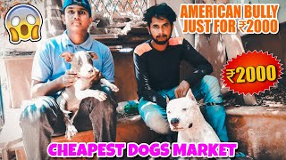 CHEAPEST DOG || AMERICAN BULLY, PITBULL,  RS2000 ||ALL INDIA DELIVERY