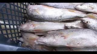 Tutorial Pembuat Sosis Ikan
