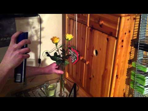 Rosen haltbar machen mit Haarspray (Blumen haltbar machen) - so geht's