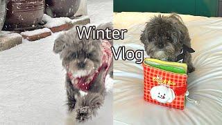 겨울의 임자 Vlog / 실버 말티푸,댕캉스,홍대라이즈…