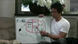 犬しつけ DVD しつけの動画多数 http://bit.ly/24B4RGj TVチャンピョン2...
