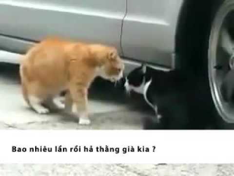 Clip   Clip Sub viet tu che cho Clip meo hai vo bung sub by Super Dragon GVN   Xem clip tai Video Zing