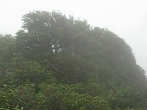 Clouds and wind in the cloud forest of Monteverde, Costa Rica