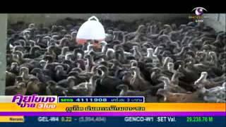 พิษณุโลกเลี้ยงไก่ดำขายราคาดี