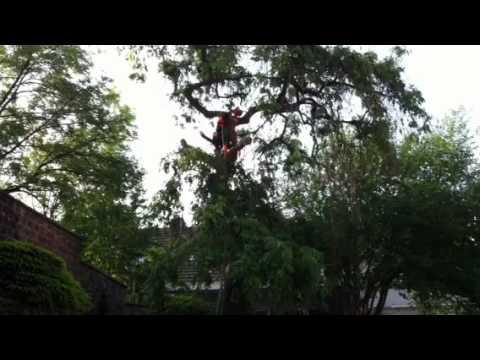 Klettergurt Für Baumfällung : Baumarbeiten! youtube