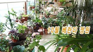 10월의 베란다 정원/ Balcony garden in…