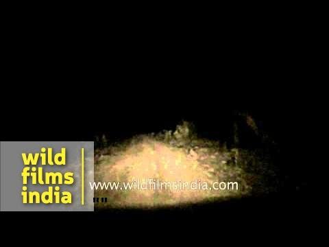 Panna National Park night safari