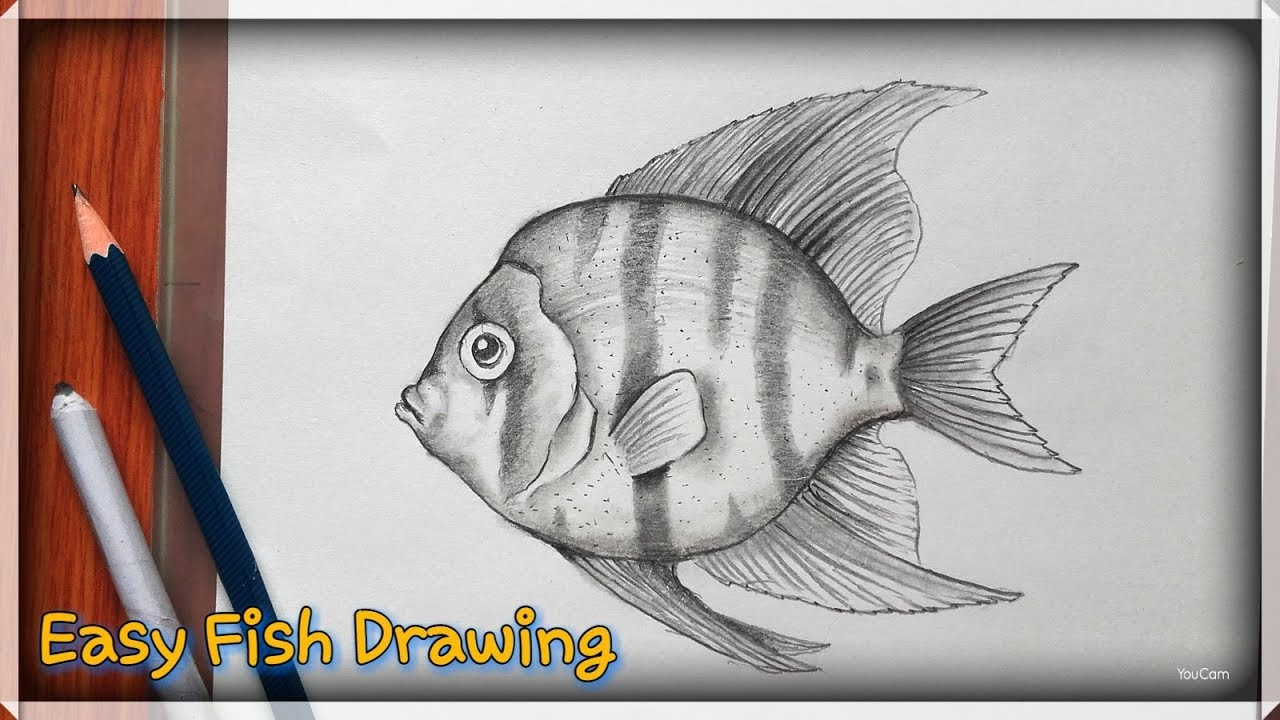How to draw a fish easy pencil sketch for beginners
