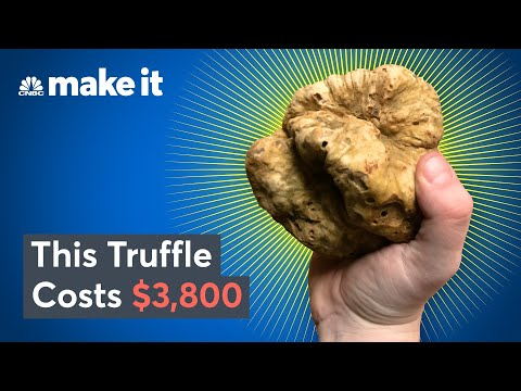 Why White Truffles Cost Up To $75K Per Pound