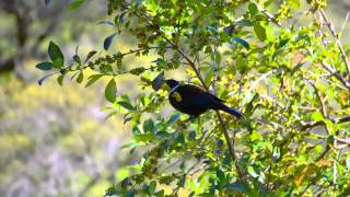 Native Bird Life in West Auckland, New Zealand