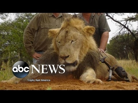 Cecil the Lion: What Happened When Beloved Lion Was Killed