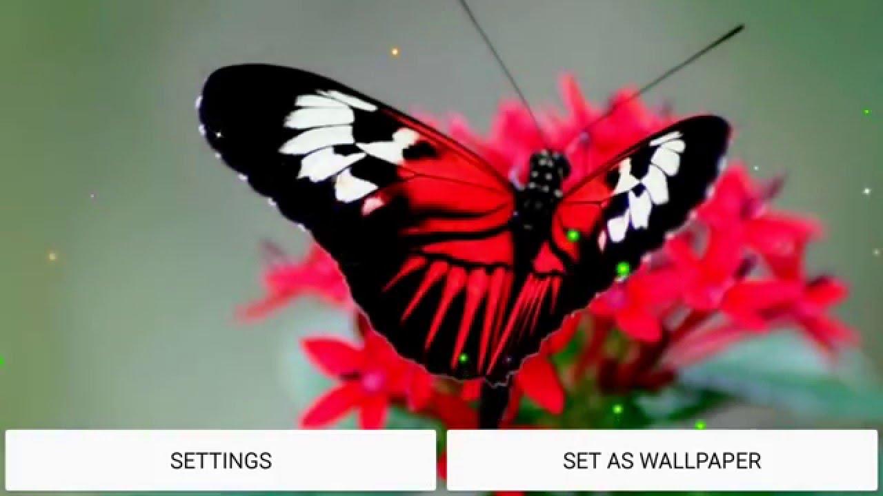 Butterfly Hd Live Wallpaper Youtube