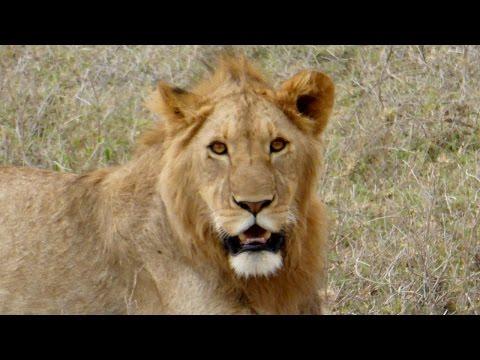 Ngorongoro Crater Safari, Tanzania - 16 February 2015