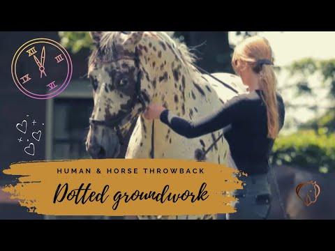 Nevada appaloosa stallion: Groundwork Academic Art of Riding