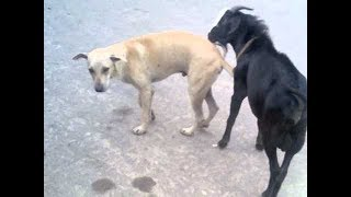 Street Dog Pissed  on  Man  kutte ne bhi nhi choda