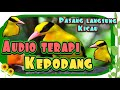 Audio Terapi Kepodang Macet Bunyi Paling Ampuh Ngekek(.mp3 .mp4) Mp3 - Mp4 Download